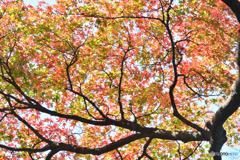 公園の片隅に秋を見つけた
