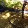 木漏れ日と戯れる