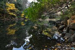 三四郎池の秋模様