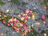 秋のおとづれ2