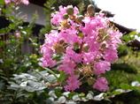 真夏日に咲く花