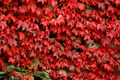 小樽の観光地で見た紅葉