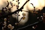 春の息吹き・・・