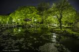 緑鏡と花筏