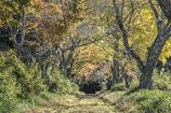 秋色のトンネル