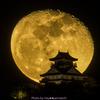 立待月vs岐阜城