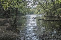 新緑の池辺(中池)