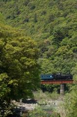 新緑の大井川鐵道