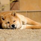 NIKON NIKON D300で撮影した動物(86681367)の写真(画像)