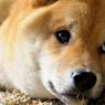 NIKON NIKON D300で撮影した動物(94141470)の写真(画像)