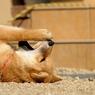 NIKON NIKON D300で撮影した動物(86691368)の写真(画像)
