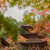 三重塔 ~ 西明寺