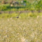 NIKON NIKON D300で撮影した動物(02191667)の写真(画像)