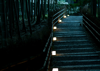 CANON Canon EOS Kiss Digital Xで撮影した風景(墓に向かう道)の写真(画像)