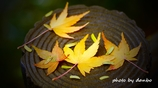 Autumn Falls <11>