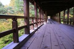 紅葉が始まった通天橋