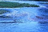 鴨川の流れ