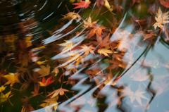 秋の終わり