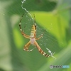 クモさん1