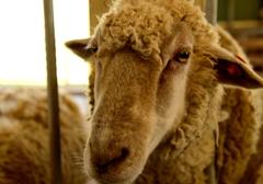 羊~うだアニマルパーク~