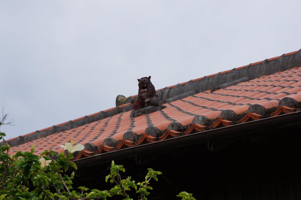 屋根の住人