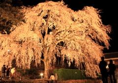 妙祐寺夜桜