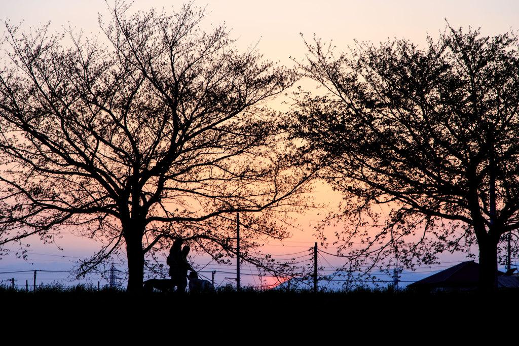 夕暮れの散歩道