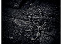MAMIYA RB67 PROFESSIONAL SDで撮影した(snap 生と死)の写真(画像)