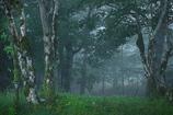 柵越しの森