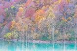 白水湖の秋