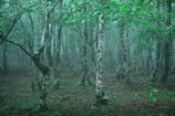 大板屋名月の森1