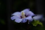 雨の日 1