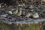 対岸の小鳥2