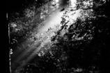 朝の森 1