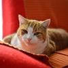 我が家の猫1