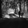 森へ散歩2