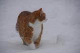 雪の中で 2