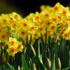 春ですね〜〜