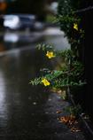 雨の中 1