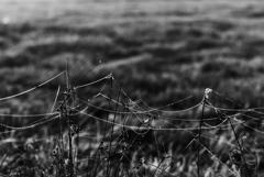 もつれた糸