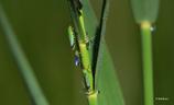 カラフルな虫たち
