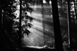 森の光 1