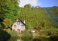 NIKON NIKON D800で撮影した(ワイン畑と小屋)の写真(画像)