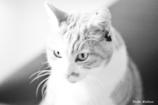 ネコのタロちゃん