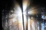 朝の光 2