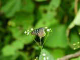ボクを魅了するオキナワの蝶 3