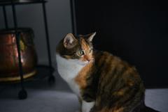 我が家の猫2