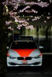 スイスの桜 6