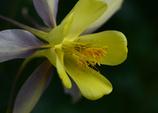 花ふたつ 1