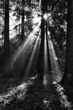 森の光 2